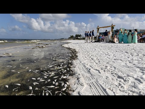 Thousands Of Dead Fish From Red Tide Crashed This Couple's Dream Wedding