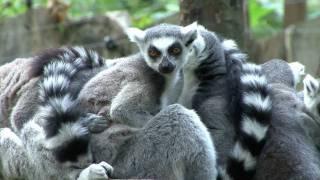 Einfach Tierisch    Zoo Cottbus  HD Teil 1-2