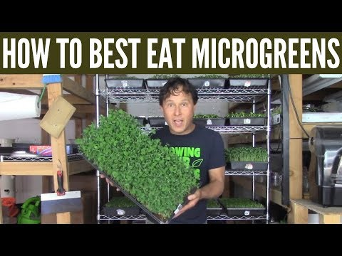 How to Best Eat Microgreens for the Most Health Benefit