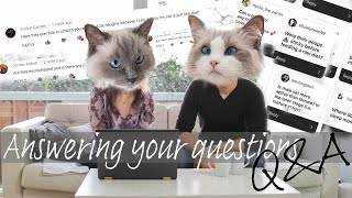 Q&A answering our followers questions   1K subscribers   Ragdolls Pixie and Bluebell