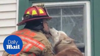 Grateful pup kisses firefighter who rescued him
