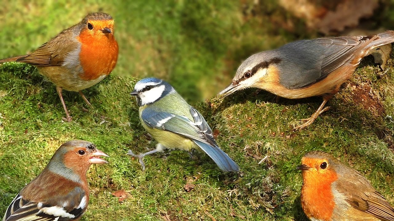 Videos For Cats To Watch Birds In Woodland Wonderland Youtube