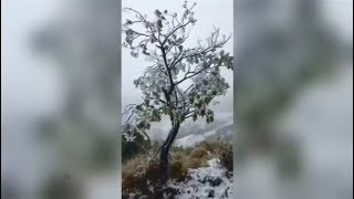 Sturmtief: Schnee auf Hawaii