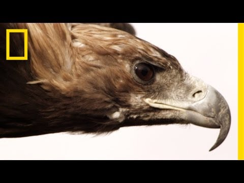 Epic Slow-Mo Predators (Bassnectar Dubstep Remix)   National Geographic