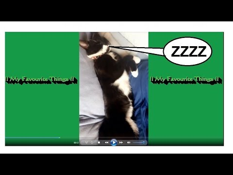 😍 CUTE Kitten Is Really Tired - Does Not Want To WAKE UP ● Cute Cat Video 😍
