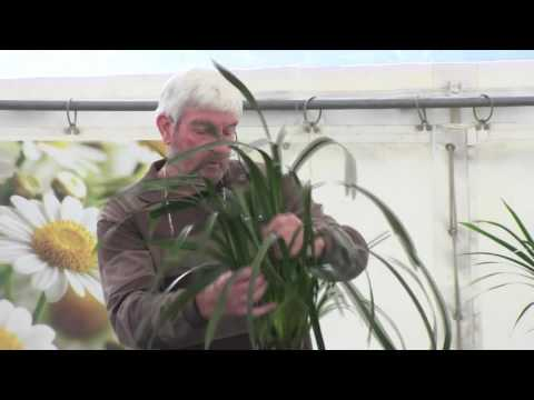 How to Grow Orchids with Glen Hopkinson