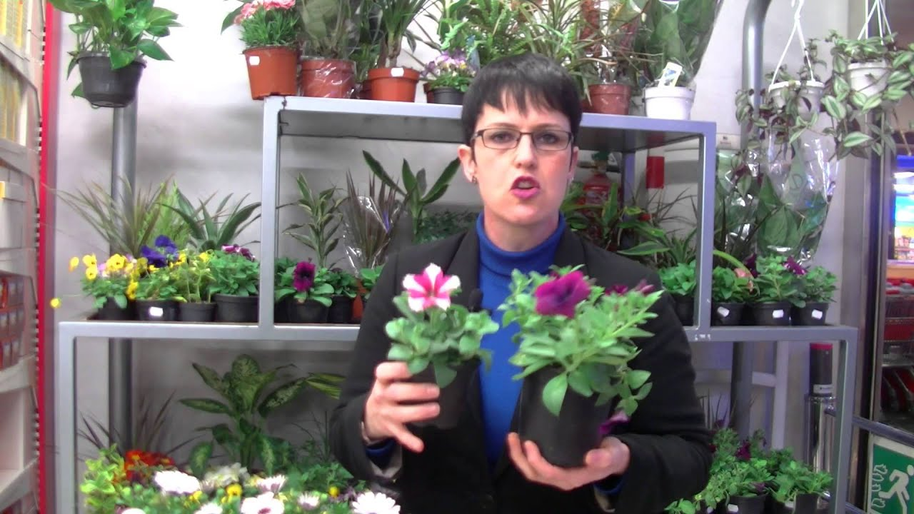 Plantas de primavera verano para nuestros balcones - Plantas de temporada primavera ...