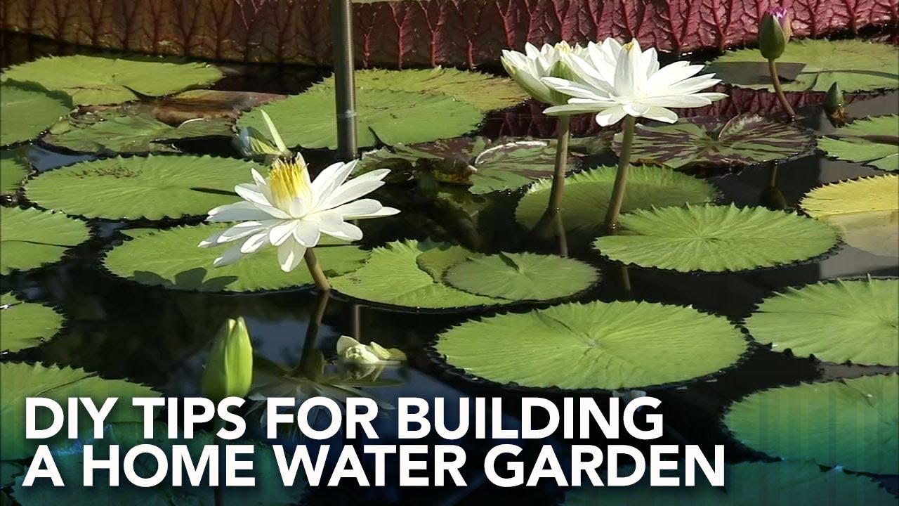 DIY tips for building a home water garden | FYI on the Scene & DIY tips for building a home water garden | FYI on the Scene - YouTube