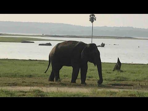 Top10 Recommended Hotels In Dambulla, Sigiriya, Sri Lanka
