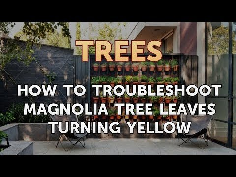How To Troubleshoot Magnolia Tree Leaves Turning Yellow Youtube