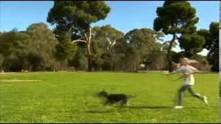 Dog Training   Candy Behaving Badly   All About Animals Tv Show