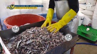 대변항의 꽃~* 어시장 멸치 젓갈 골목?! | 관찰카메…