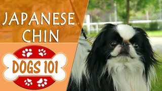 Dogs 101  JAPANESE CHIN  Top Dog Facts About the JAPANESE CHIN