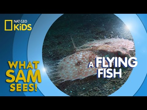 A Flying Fish | What Sam Sees