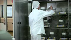 Emulsifiers, stabilizers & know-how to put to work - Ice cream
