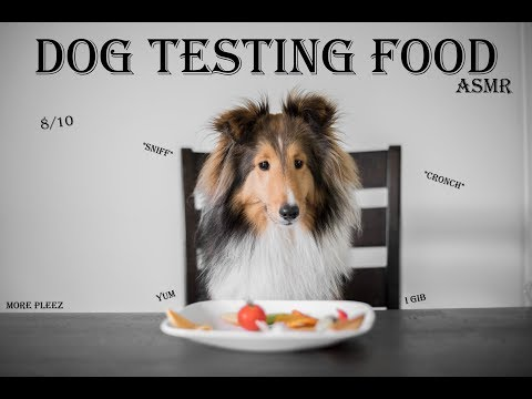 Dog testing food | My sheltie pack (ASMR)