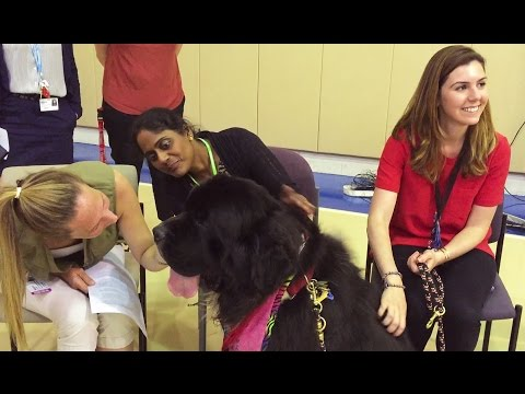 The Benefits of Animal Assisted Therapy for Psychiatric Patients