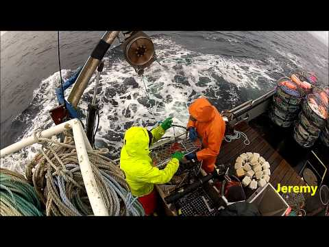 Commercial Dungeness Crab Fishing