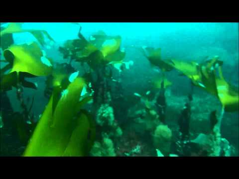 Scuba Diving 15/06/14
