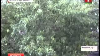 Ураган в Гомеле