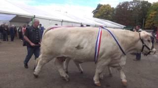 Concours Interdépartemental de Bovins Reproducteurs de Race Charolaise 2013 à Avallon (89)