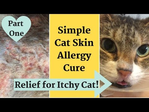 home-remedy-for-cat-with-itchy,-inflamed-skin-*-allergy-relief!