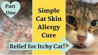 How to Soothe a Cat with Itchy, Inflamed Skin * Allergy Relief!