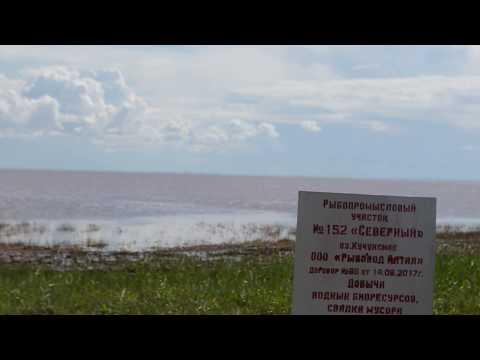 Кучукское озеро Алтайский край август 2017