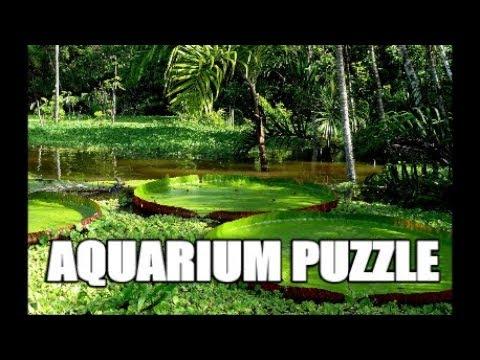 AQUARIUM PUZZLE : Take the Dan Hiteshew Challenge