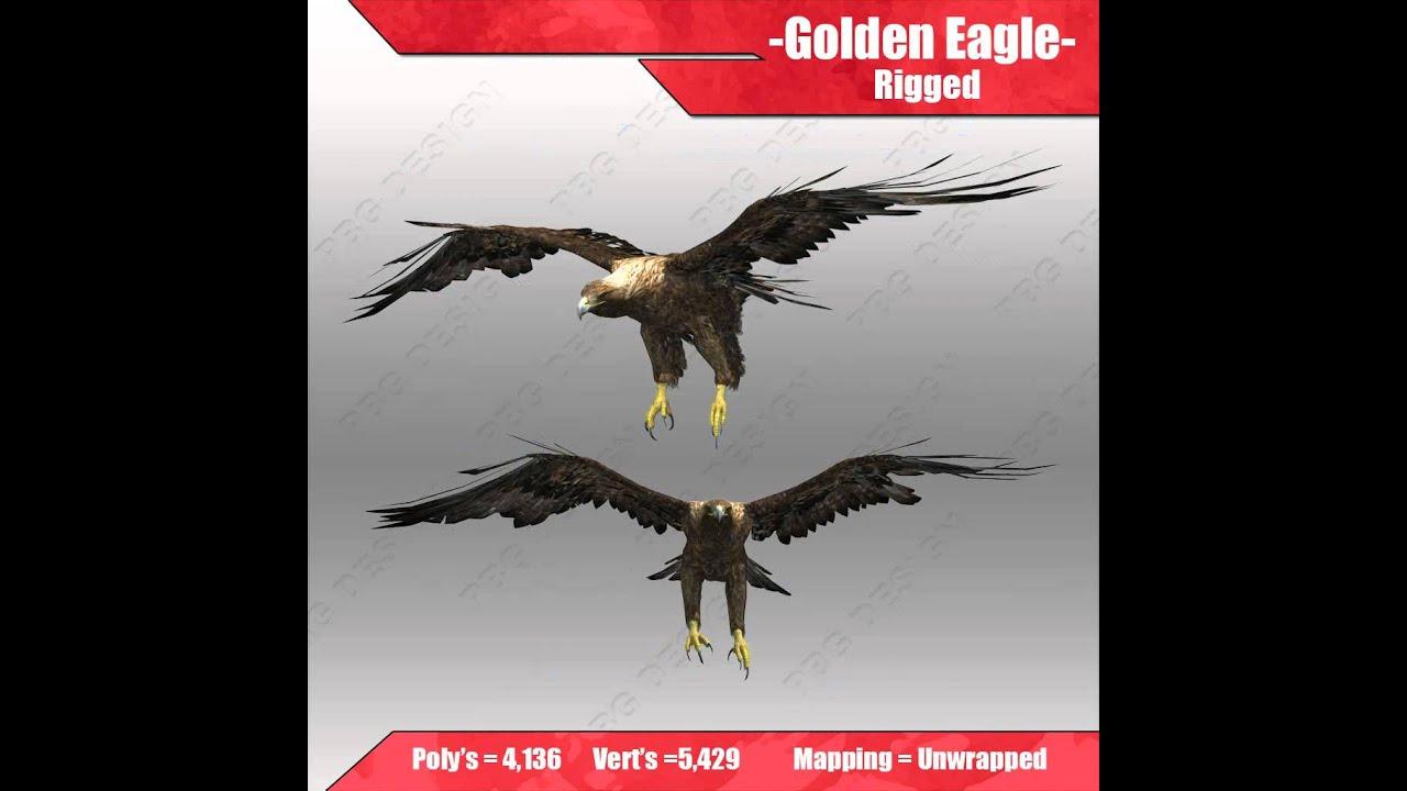 Golden Eagle 3D model from CGTrader com