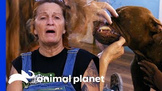 'In My 30 Years Of Rescue, I've Never Seen Anything Like That!' | Pit Bulls & Parolees