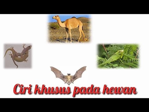 Ciri-ciri khusus pada hewan dan fungsi nya - YouTube