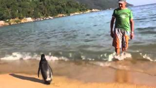 Repeat youtube video PINGUIM VISITA SEU AMIGO NA ILHA GRANDE