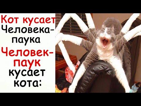 Лютые Приколы Кот кусает Человека-паука Человек-паук кусает кота: