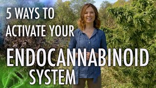 5 Ways to Activate Your Endocannabinoid System! | CBD Series