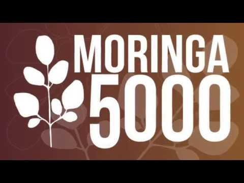 Moringa benefits for your health and body   辣木對身體的好處