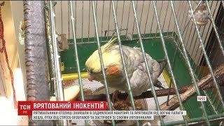 Столичні рятувальники винесли з охопленої вогнем квартири нажаханого папугу