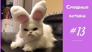 Прикольные КОТЫ и смешные КОТИКИ #13 | Котики чудят