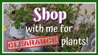 Shopping for Clearance Plants🍃 Vlog pt. 2 || Kreatyve Laydiiee