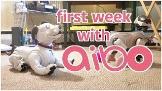 my first week with the aibo 1000!
