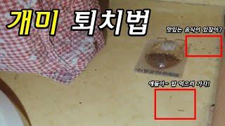 개미 퇴치 방법 | 개미 퇴치 약, 개미박멸, 집개미 …