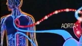 solunum sistemi
