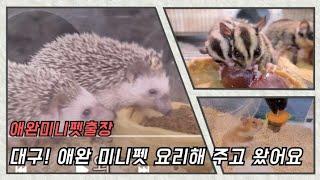 고슴도치/애완/미니펫스토리/햄스터/대구출장/요리먹방[?…