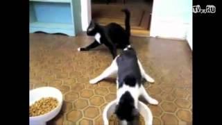 Коты вернулись с тусовки