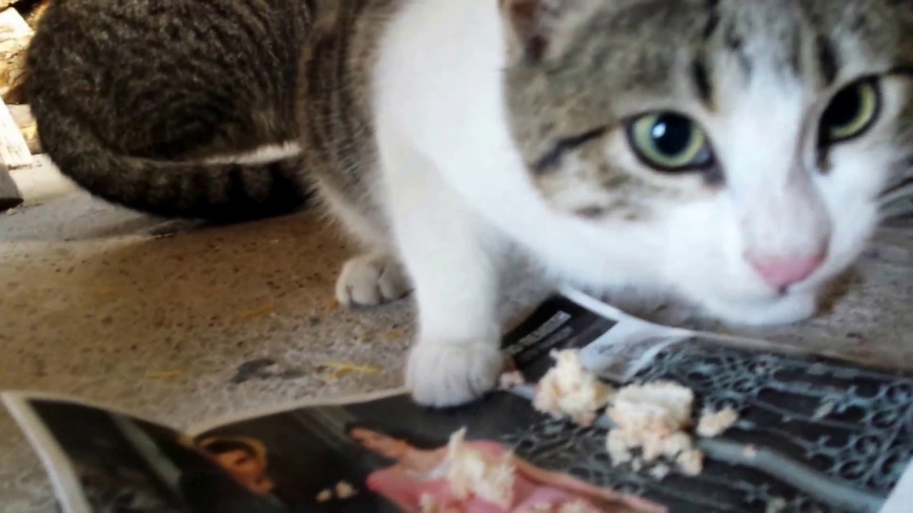 How To Get Kittens To Eat Food