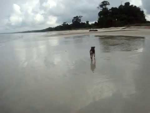 Africa amazing it still my dog ​​Pepito Nyonié holiday in Gabon