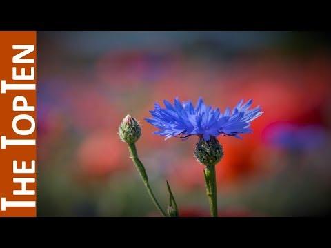 The Top Ten Most Beautiful Flower Fields in the World