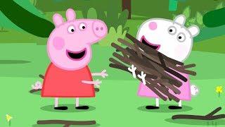 Peppa Pig Português Brasil | Acampamento Escolar | HD | Desenhos Animados