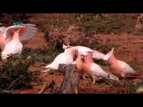 Khám phá vùng đất của loài vẹt || Thế giới động vật hoang dã - thuyết minh