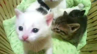 Котята утром